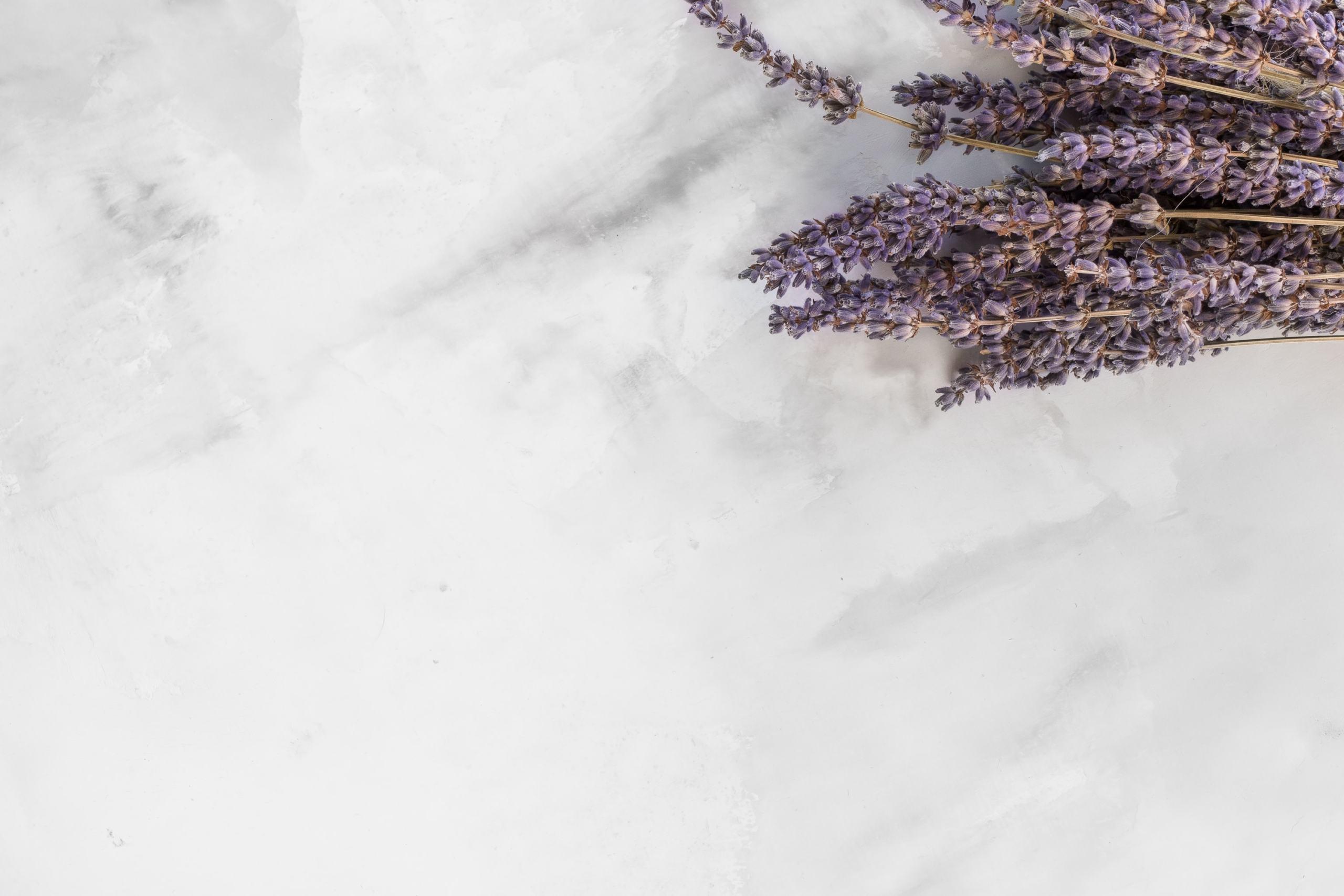a colorful lavender plant